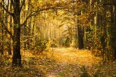 fall Natur Skog arkivbild