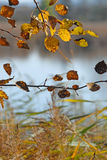 Fall in nature Stock Photography