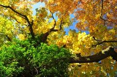 Fall nature Stock Image
