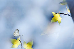 Fall in nature with a butterfly stand on the leaf Royalty Free Stock Photo