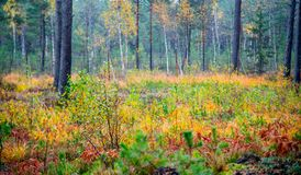 Fall nature colors. Of mixed tree in autumn royalty free stock photo