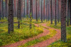 Fall nature colors. And path through forest royalty free stock photos