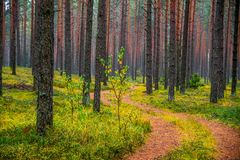 Fall nature colors. And path through forest stock image