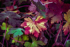 Fall in nature Royalty Free Stock Photo