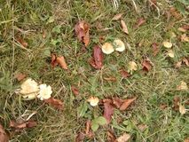 Fall in nature foilage, the leaves on the lawn royalty free stock images