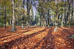 Fall in the Netherlands Stock Images