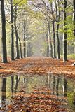 Fall in the Netherlands Stock Photos