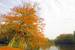 Fall in the Netherlands Royalty Free Stock Images