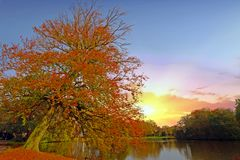 Fall in the Netherlands at sunset Royalty Free Stock Photos