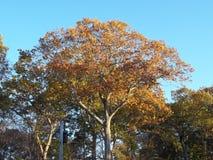 Fall in New England stock photos