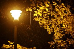 Fall Night in Park Stock Image