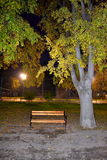 Fall night park alley sight. Fall colored leaves trees and playground at background dark night sky urban environment.November 14,2014. Varna city park Royalty Free Stock Photography