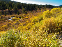 Fall in northern wilderness, Yukon T, Canada Stock Photo