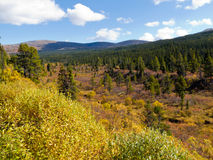 Fall in northern wilderness, Yukon T, Canada Stock Photography