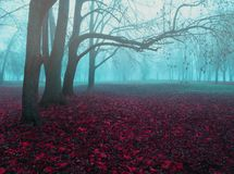 Free Fall November Foggy Landscape. Deserted Fall Park With Bare Trees And Dry Fallen Red Fall Leaves Royalty Free Stock Photo - 153267435