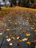 Fall in Nowa Huta Stock Photos