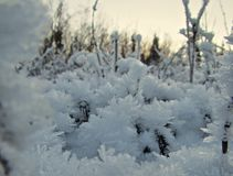 Fall NWT hike. Winter Arctic frost Stock Photography