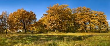 Fall in oak tree park Stock Image
