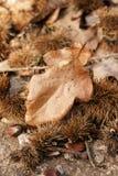 Fall- oder Herbstthema Stockfotos
