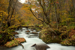 Fall of Oirase, Japan Stock Images