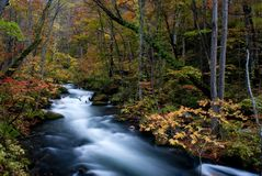 Fall of Oirase, Japan. This is very famous river for the person like to take the river photo especilly in the fall season with red maple and leaf Royalty Free Stock Photo
