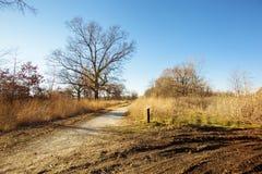 Fall Ojibway Tallgrass Prairie. Fall colours at Ojibway Tallgrass Prairie in Windsor, Ontario Royalty Free Stock Image