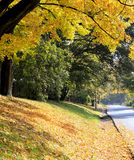 Fall orange and yellow trees near the road Stock Image