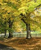 Fall orange and yellow trees near the road. Royalty Free Stock Photos