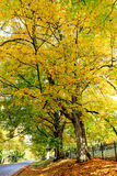 Fall orange and yellow trees near the road. Royalty Free Stock Photos