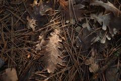 Autumn Lef stock photo