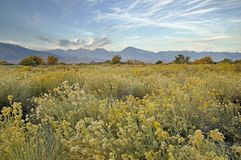 Fall Owens Valley Morning Stock Photography
