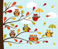 Fall Owls Stock Photo