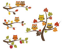 Fall owls Stock Image