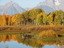 Fall at Oxbow Bend GTNP Stock Photography