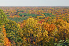 Fall Panorama in a Midwest Forest Royalty Free Stock Photography