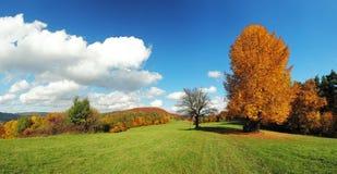 Fall-Panorama mit Wald Stockbild