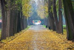 Fall in the park. A scene of fall royalty free stock photography