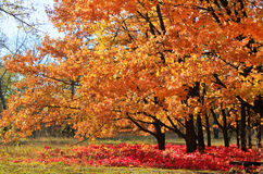 Fall in a park. Beautiful autumn. Fall in a park Stock Photo