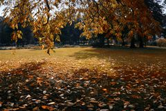 Fall in the park. Leaves on the grass Stock Images