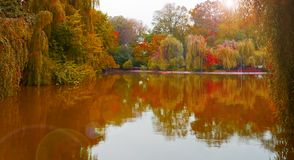 Fall in park 3 Stock Image