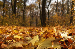 Fall in park. In Poland stock image