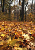 Fall in park. In Poland royalty free stock photo