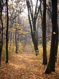 Fall in park. In Poland royalty free stock photos