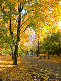 Fall in the park stock image