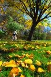 Fall park Stock Image