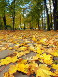 Fall in park royalty free stock photo