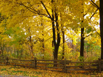 Fall park. Park in the fall with forest in background and wooden fence stock photography