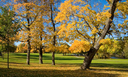Fall in the park Royalty Free Stock Photos