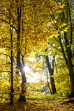 Fall in a park. Beautiful autumn forest landscape. Indian summer Royalty Free Stock Photography