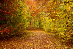 Fall in a park Royalty Free Stock Photography